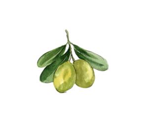 Huile d'olive Terre de Mistral