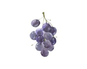 Cave à vins Terre de Mistral